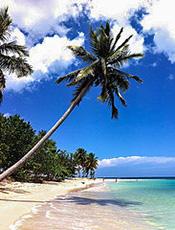 a plam tree on a beach
