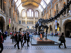 skeleton of a dinosaur in a museum hall in London - London museum