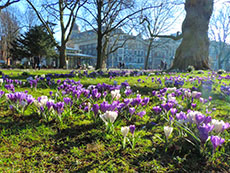 colorful spring flowers blloming on a lawn in Amsterdam