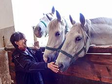 woman with Lippinzaners in a stable - one of the enjoyable European experiences