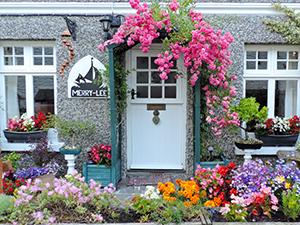 flowers around a house ib Polperro, one of the best places to visit in Cornwall