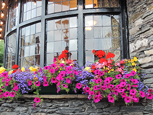 flowers in a windowbox in the Lake District in England
