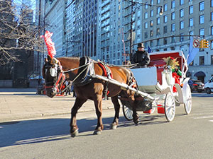 taking a carriage ride in Central Park, a good things to do in New York in the winter
