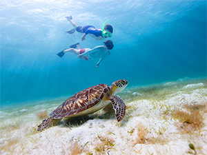 a sea turtle in the Caribbean