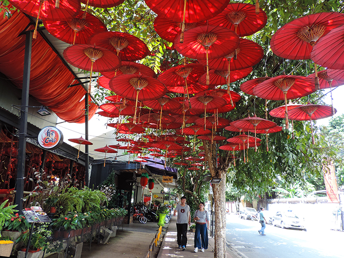 red umbrellas hanging from tree in Chiang Mai