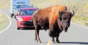 Yellowstone Family Vacation