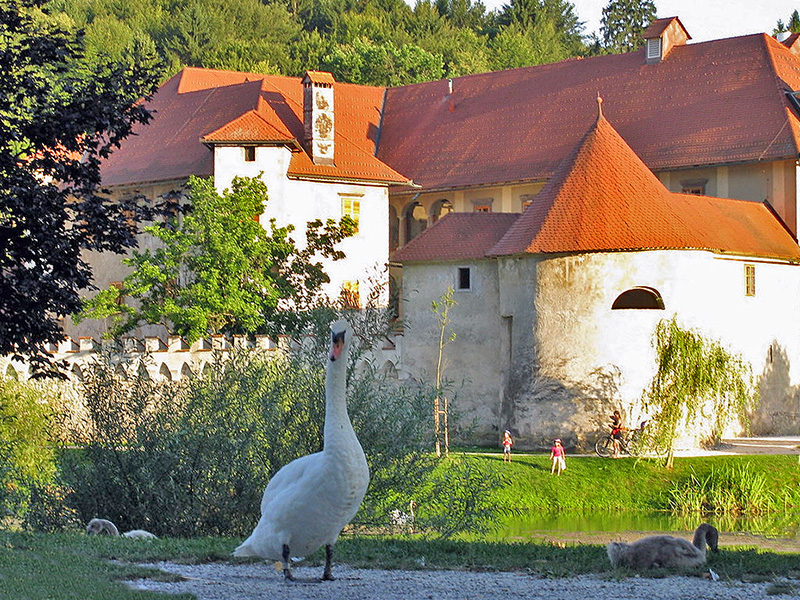 a swan by a medieval building in an area that's good for wellness related travel
