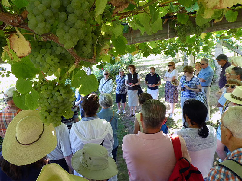 A talk on wine below raised vines on Cunard's wine cruise