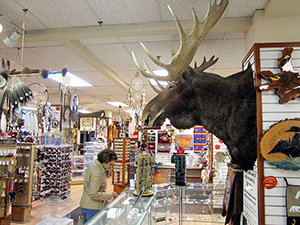 A moose head on a wall in a shop