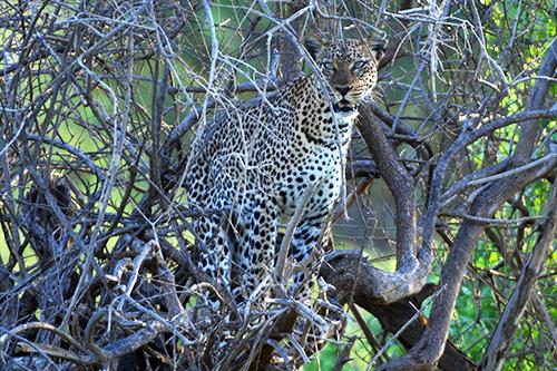 safari in kenya Tanzania