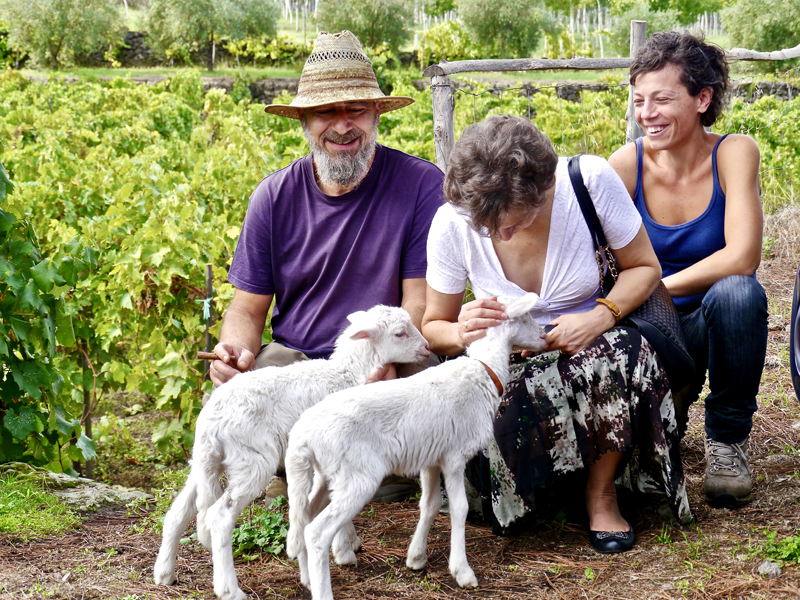 people with two lambs at wineries in sicily