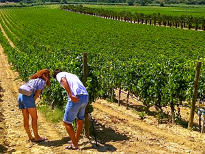 a couple in a vineyard