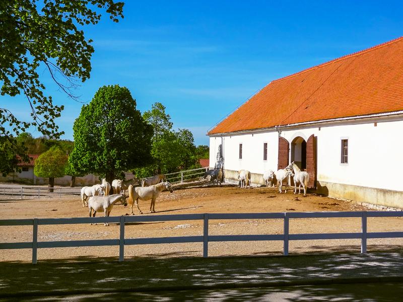 a barn at the Lipica Stud Farm