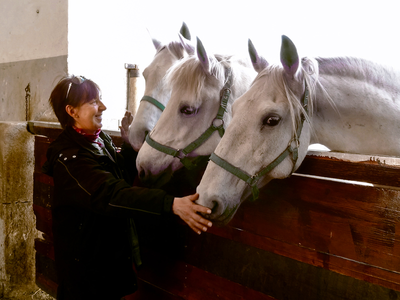 a woman with horses at the Lipica Stud Farm