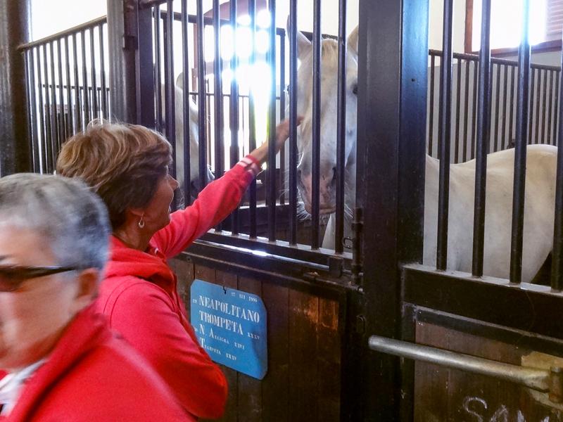 wwoman petting a horse at teh Lipica stud farm