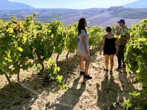 three people in a vineyard