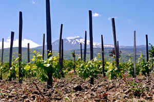 a winery in sicily with Mt Etna in the distance