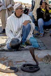 watching a snake charmer in the Jemaa el-Fna, one of the things to do in Marrakesh