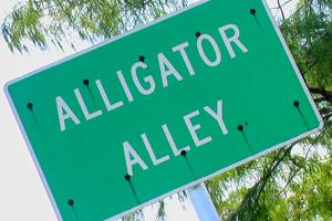 an alligator alley sign
