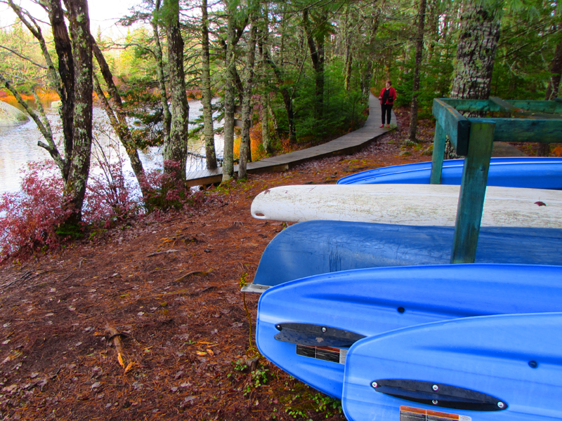 blue paddle boards and kayaks along a forest path by a river