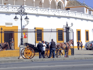 carriage drivers and their horses