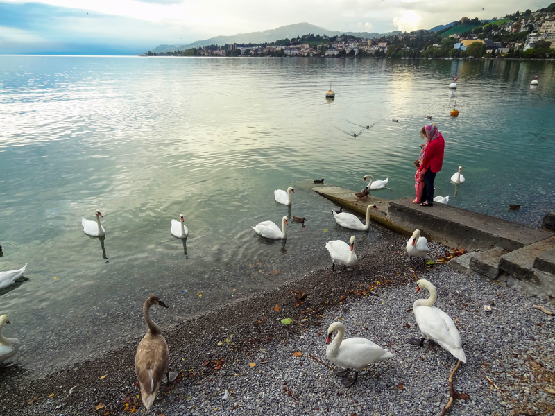 a woman and child looking at swans in Montreux Switzerland