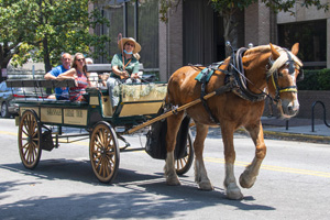 people in a  horse-drawn carriage, one of the things to do in Savannah