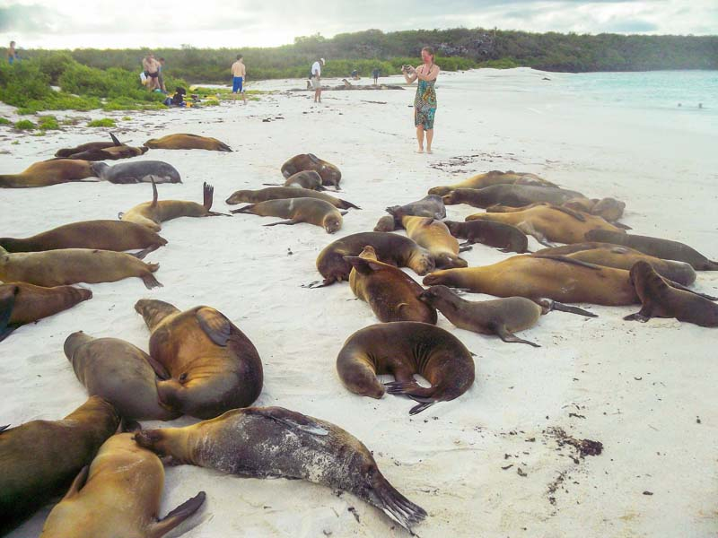 a woman taking photos of sea lions on a beach on a Galapagos cruise vacation
