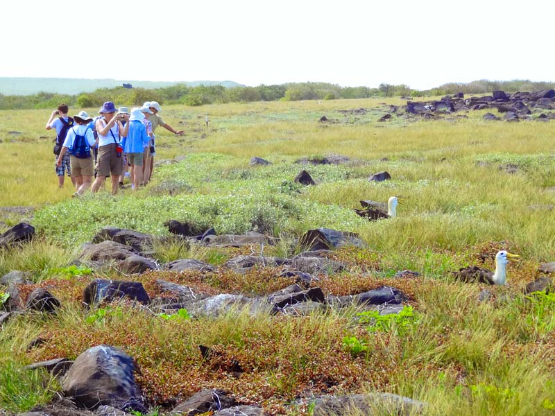 a group of people looking at birds in a field seen on a Galapagos cruise vacation
