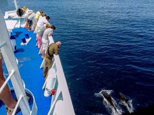 people on a ship watching dolphins below seen on a Galapagos cruise vacation