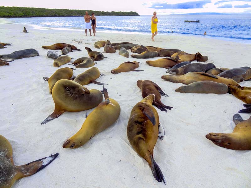 people looking at sea lions seen on a Galapagos cruise vacation