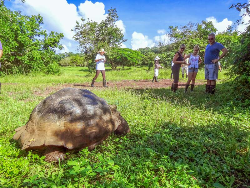 people looking at a large tortoise