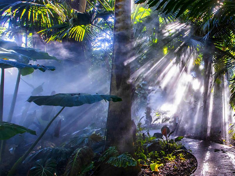 a steamy jungle garden in one of Florida's botanical gardens