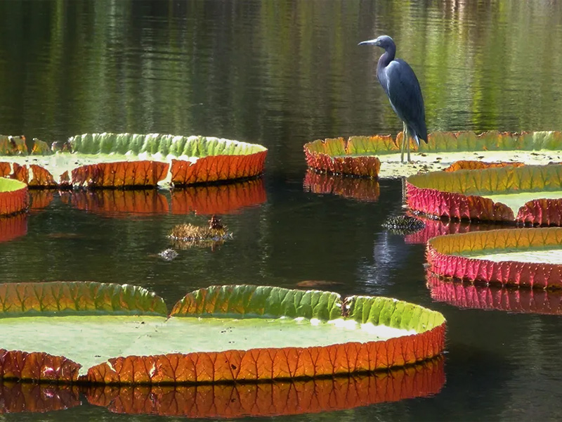 a bird on a lily pad in one of Florida's botanical gardens