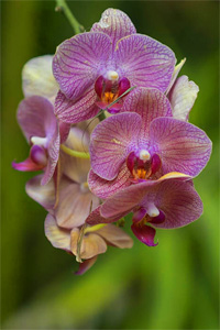 an orchid in one of Florida's botanical gardens