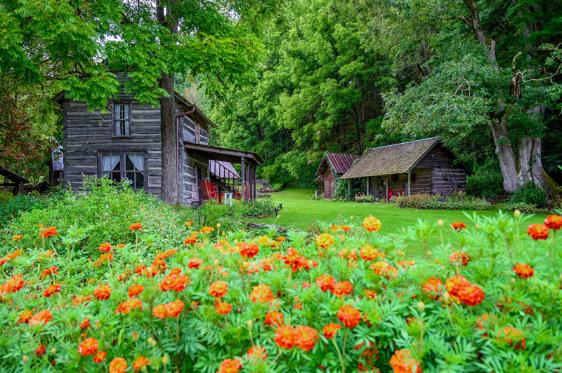 old log cabins in teh woods with wildflowers aall about