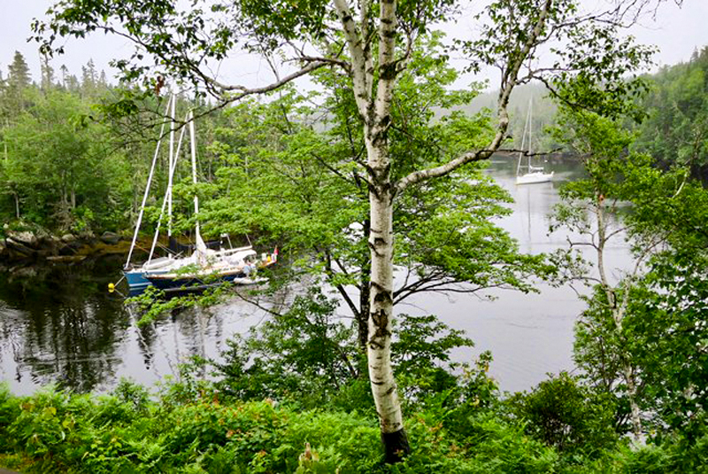 boats on a river in a forest see at Liscombe Lodge