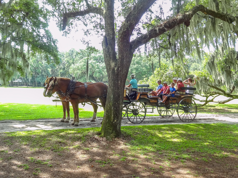 people in a horse-drawn carriage on one of the Charleston plantations
