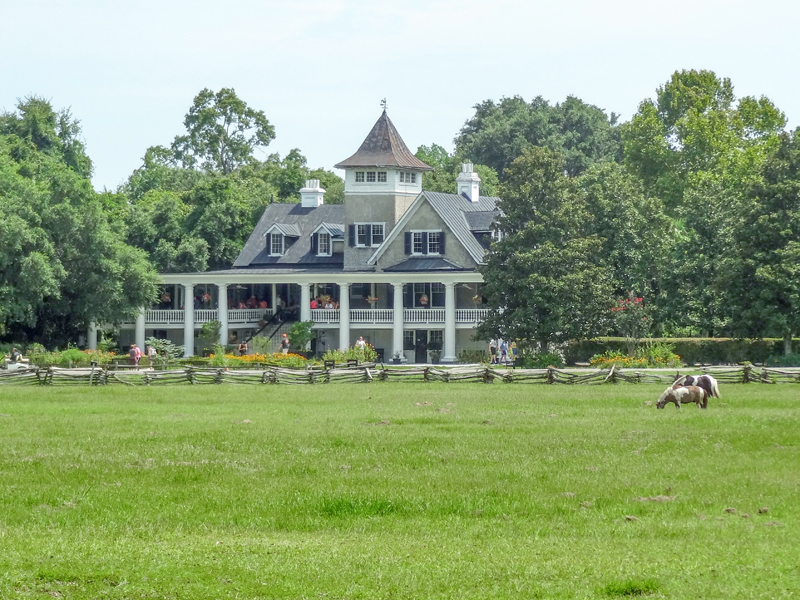 horse grazing in front of a house on one of the Charleston plantations