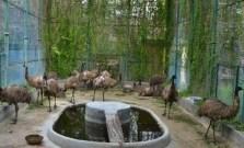Emu At Gulab Bagh and Zoo Udaipur