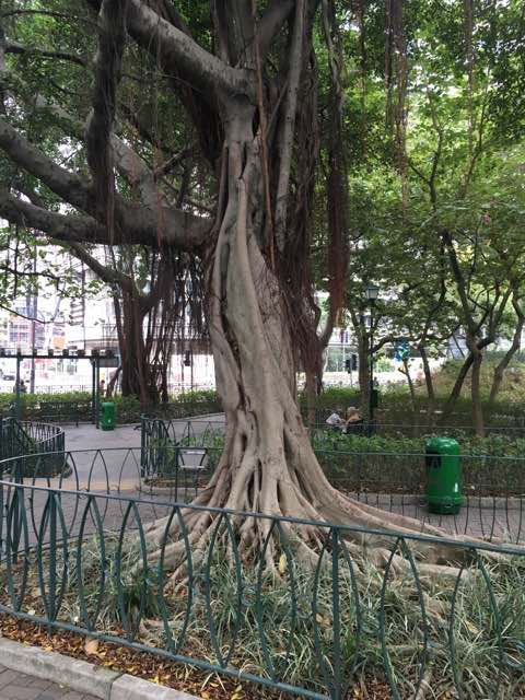 Kowloon Day 1 | Restful park in Kowloon | | Never to old to travel | Gary House