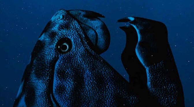 Ocean Grave (Matt Serafini)
