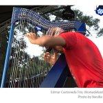 Edmar-Castaneda-Trio-Womadelaide-photo-Neville-Cichon-02