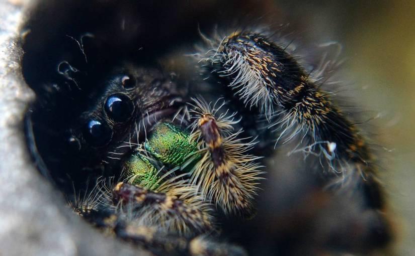 Spiders of Toronto: #2017bestnine