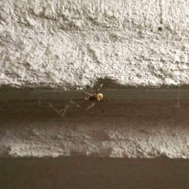 Small spider climbing along the outside of a building