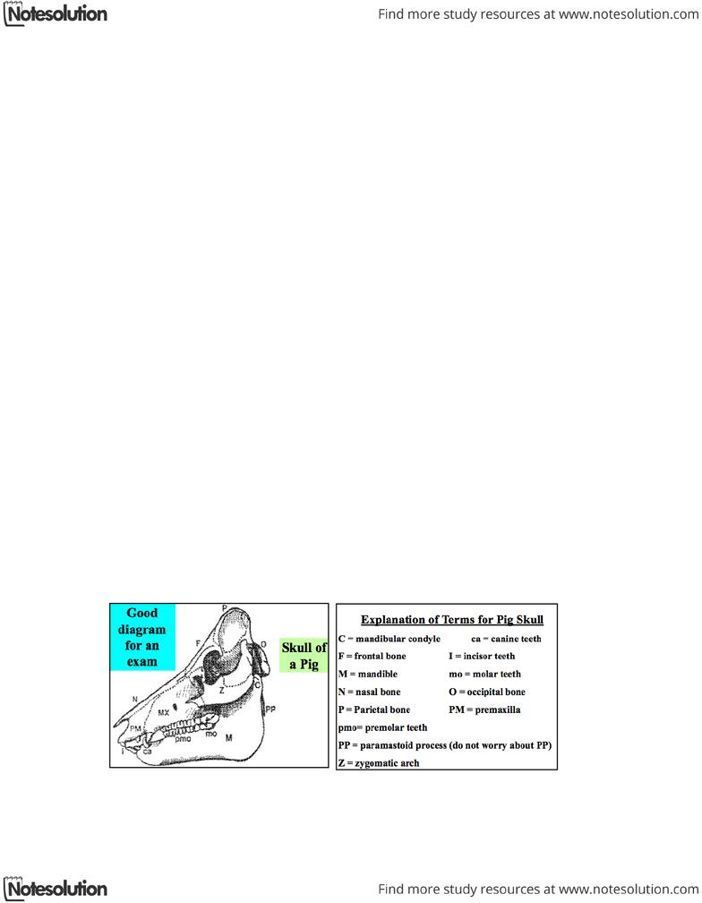 hight resolution of anatomy of the skull