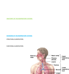 the respiratory system [ 784 x 1170 Pixel ]