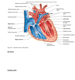 lecture 2 cardiac and vascular structure and diagram [ 784 x 1145 Pixel ]