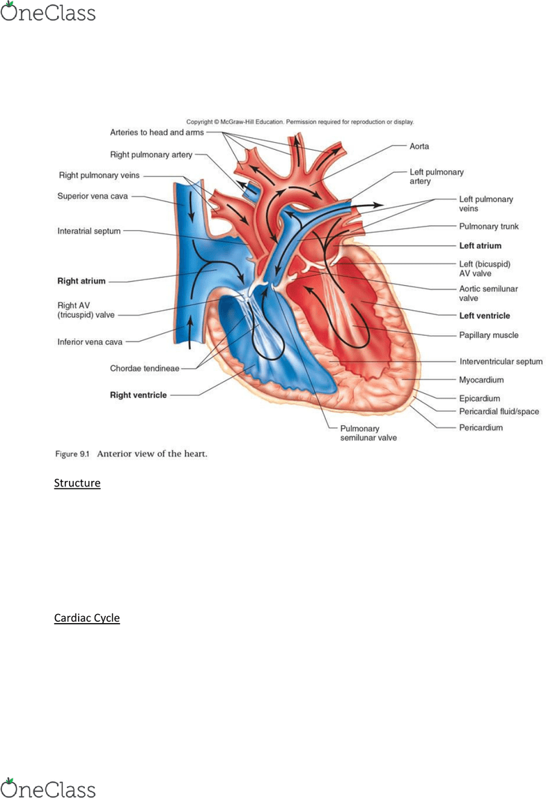 hight resolution of lecture 2 cardiac and vascular structure and diagram