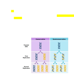 biol 112 lecture notes lecture 21 semiconservative replication heavy strand nitrogenous basepremium [ 784 x 1291 Pixel ]